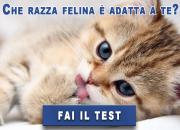 Qual è la razza di gatto adatta a te?